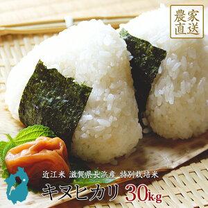 キヌヒカリ お米 30kg 送料無料 近江米 滋賀県産 環境こだわり米 令和2年産 美味しい 玄米 白米