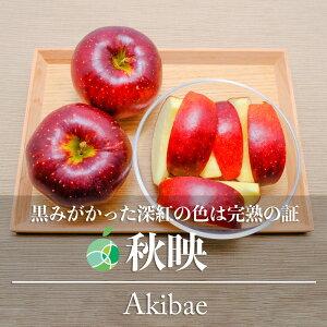 送料無料 秋映 りんご 贈答用 約5kg 10〜18玉 長野県産