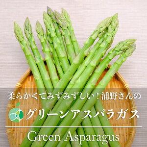 【送料無料】浦野さんのグリーンアスパラガス 約1kg(L〜2L)30〜40本 長野県・須坂市産