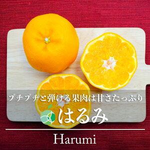 【送料無料】はるみ(みかん)赤秀 2L 5kg(約23玉)愛知県・蒲郡産