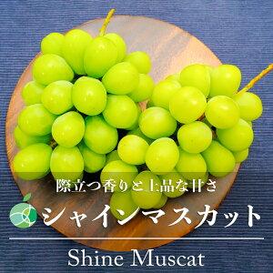 【送料無料】シャインマスカット(ぶどう)ハウス栽培 約1kg(2房)長野県産