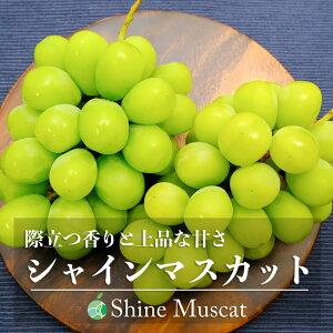 【送料無料】シャインマスカット(ぶどう)贈答用 約3.5kg(6房)長野県産
