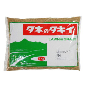 芝の種 ケンタッキーブルーグラス ニューグレード 1kg 緑化用 芝生用