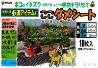 DAIMここダメシート10枚入動物を傷つけない樹脂製の突起で侵入を防ぐ!ベランダ、軒下、畑、お庭等の猫よけに第一ビニール株式会社日本製