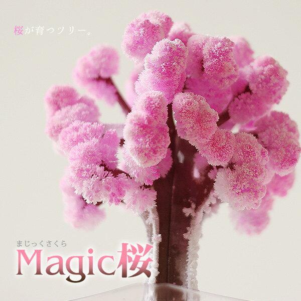 【ポイント10倍】マジック桜【マジックサクラ】