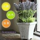 ラベンダー アーティフィシャルグリーンL【消臭グッズ 空気清浄 造花 鉢植え デオドラント 薄紫 フラワー アンティー…