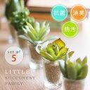 ポイント リトルサキュレントファミリー アーティフィシャルグリーン デオドラント 多肉植物