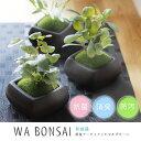 Wa Bonsai・和盆栽 消臭アーティフィシャルグリーン 角鉢タイプ【キシマ 消臭グッズ 空気清浄 造花 デオドラント 観葉植物】