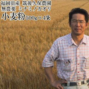 【キャッシュレスで5%還元】ミナミノカオリ 小麦粉 500g×4袋?パン用 小麦粉無農薬中 強力粉福岡県産筑後久保農園
