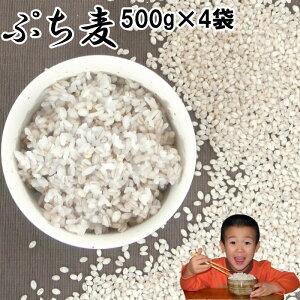 ぷち麦 500g×4袋入|無農薬 大麦福岡県産筑後久保農園ご飯と一緒に炊いて麦ご飯味噌造り用丸麦