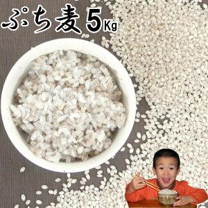 ぷち麦 5Kg|無農薬 大麦福岡県産筑後久保農園ご飯と一緒に炊いて麦ご飯味噌造り用丸麦