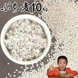 ぷち麦 10Kg|無農薬 大麦福岡県産筑後久保農園ご飯と一緒に炊いて麦ご飯味噌造り用丸麦
