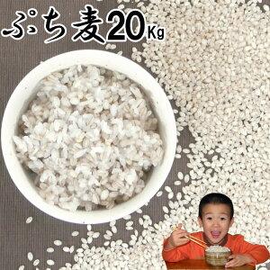 ぷち麦 20Kg|無農薬 大麦福岡県産筑後久保農園ご飯と一緒に炊いて麦ご飯味噌造り用丸麦