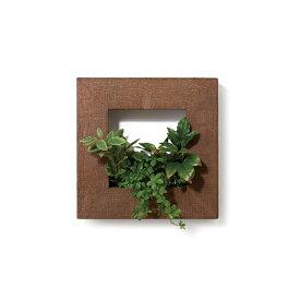 PIANTA×STANZA(ピアンタ・スタンツァ)マイギャラリー・Sサイズ300×300mmチーク(フェイクグリーン/人工植物)