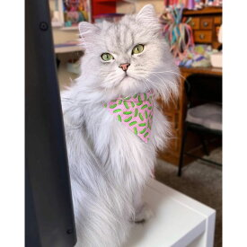 WHISKERS CRAFTS ウィスキークラフト ペットグッズ 猫用品 首輪・ハーネス・リード 首輪・カラー【Pop Pickles Cat Collar + Bandana Set (Madethe USA)】