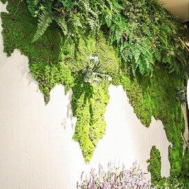 ■海外直送品 全国 送料無料■ 人工苔 苔マット フェイクグリーン 100cm×100cm