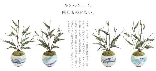 新築祝いに枯れない観葉植物プリザーブドグリーン「風雅(ふうが)」新築祝いプリザーブドグリーン枯れない観葉植物【送料無料】【あす楽】