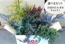 グランドカバー 選べる 6鉢セット【コニファー 北欧スタイル 植木 庭木 グランドカバー 寄せ植え 常緑樹 低木 コニフ…