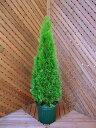 エメラルドグリーン 【コニファー 北欧スタイル クリスマスツリー 植木 ニオイヒバ スマラグド 庭木 常緑樹 …