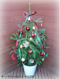 カナダトウヒ白い鉢入り(リボン付き)【クリスマスツリー コニファー 北欧スタイル クリスマスツリー本物 もみの木 グラウカトウヒ 庭木 植木 ガーデニング】