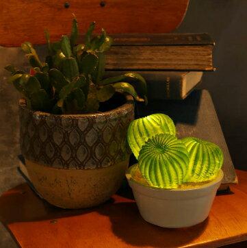 カクタスL.E.DライトC / DULTON CACTUS L.E.D. LIGHT TYPE-C/サボテン型ライト・間接照明・多肉植物・ボタニカル・LED・電池式・ダルトン【G755-916C】