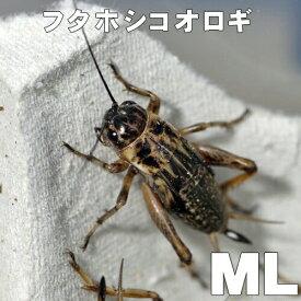 お取り寄せ品(3-4営業日)フタホシコオロギ ML (500匹)(1匹当たり11円)代引不可