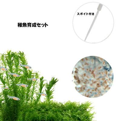 (熱帯魚活餌)(オススメ)タマミジンコ800ml(200匹〜)+ダフニアミジンコ800ml(200匹〜)