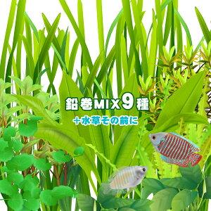 (水草)水草鉛巻きMIX 9種+水草その前に(1個)! 前景〜後景までバランス良く揃ったオススメ商品です!【水槽/熱帯魚/観賞魚/飼育】【生体】【通販/販売】【アクアリウム/あくありうむ