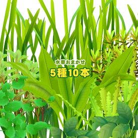 (水草)水草おまかせ5種 10本セット【水槽/熱帯魚/観賞魚/飼育】【生体】【通販/販売】【アクアリウム/あくありうむ】