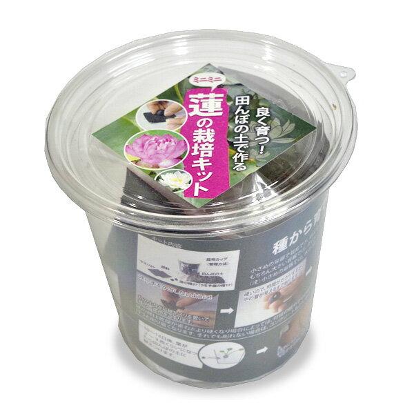 (種)小型蓮の栽培キット タネ・土付きキット【熱帯植物】【ビオトープ】 【新着】