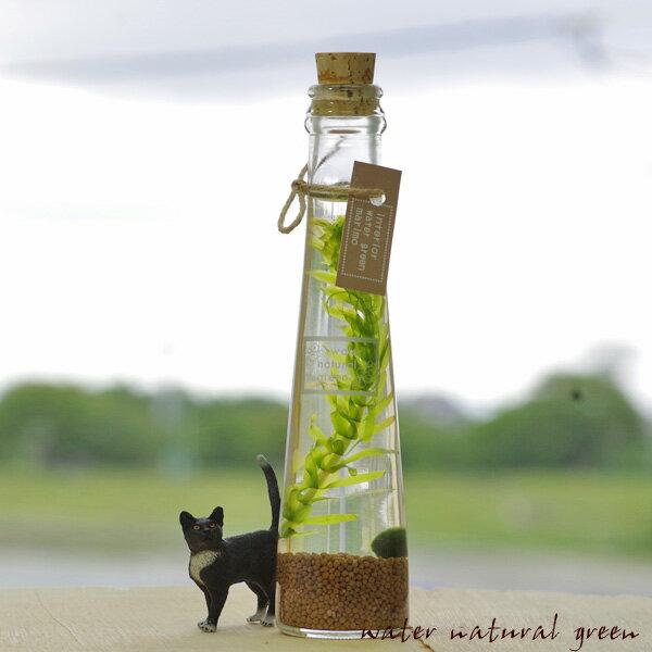 (インテリア・雑貨)夏季限定特価 ミニまりものインテリアグリーンボトル スマートボトルタイプ 【水槽/熱帯魚/観賞魚/飼育】【生体】【通販/販売】【アクアリウム/あくありうむ】