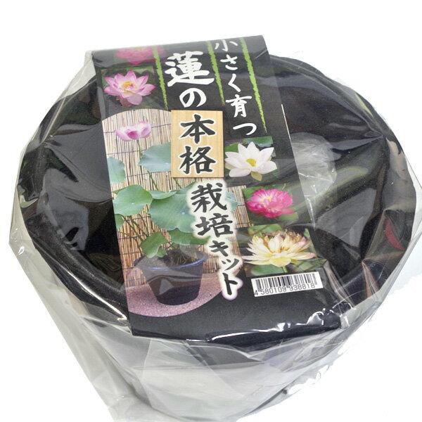 (種)鉢付き小型蓮栽培キット【熱帯植物】【ビオトープ】 【新着】