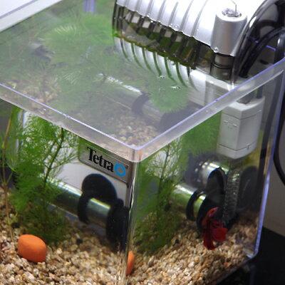 ベタ飼育セットベーシック水槽タイプ【新着】【水槽セット】【飼育セット】