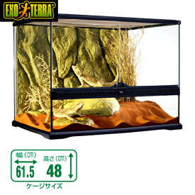 GEX グラステラリウム   6045 爬虫類 飼育 ケージ ガラスケージ 【水槽/熱帯魚/観賞魚/飼育】【生体】【通販/販売】【アクアリウム/あくありうむ】