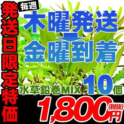 (水草)木曜日出荷限定(金曜日到着となります)水草鉛巻MIX10個(5種類以上)格安採れたて【水槽/熱帯魚/観賞魚/飼育】【生体】【通販/販売】【アクアリウム】【水草】