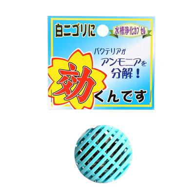 ソネケミファ効くんです白ニゴリ【水槽/熱帯魚/観賞魚/飼育】【生体】【通販】【アクアリウム】