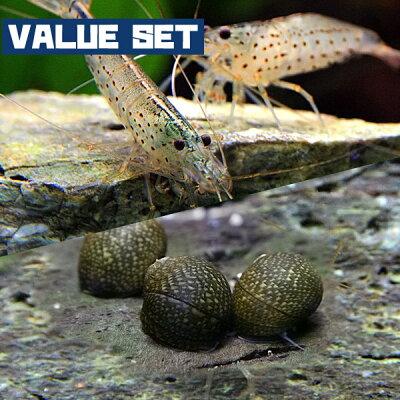 【バリューセット】▼ヤマトヌマエビ(約3-4cm)(5匹)+石巻貝(約-cm)(10匹)