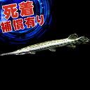 (スーパーセール)(熱帯魚)スポッテッドガー(約6-10cm)(1匹)【水槽/熱帯魚/観賞魚/飼育】【生体】【通販/販売】【アクアリウム】