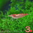 (エビ)レッドチェリーシュリンプ(約1.5cm)(3匹)【水槽/熱帯魚/観賞魚/飼育】【生体】【通販/販売】【アクアリウム…