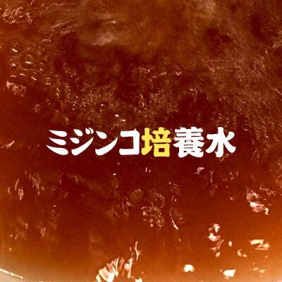(熱帯魚活餌)ネオスオリジナルミジンコ培養水1L【水槽/熱帯魚/観賞魚/飼育】【生体】【通販/販売】【アクアリウム】