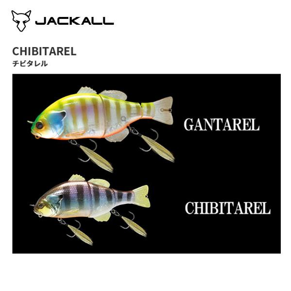 【ジャッカル】チビタレル