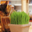 エイム グリーンラボ ペットグラス 犬と猫が好きな草 栽培セット