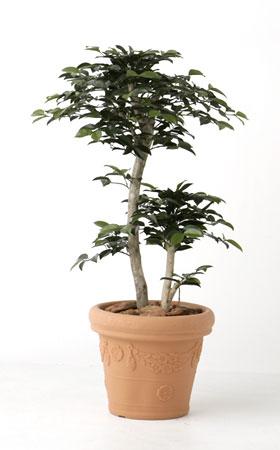 無光触媒加工 人工植物 サザンカ 1.0m