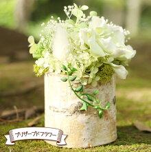 白樺(しらかば)