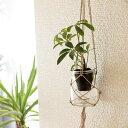 ミドリエ 交換用苗 + ハンモック 壁掛け 観葉 植物 吊り下げ ハンギング おしゃれ 寄せ植え グリーン ボタニカル ギフト ラッピング アレンジメント 飾り