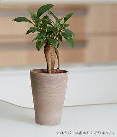 【ポイント5倍】ガジュマル【観葉植物2号ロング】