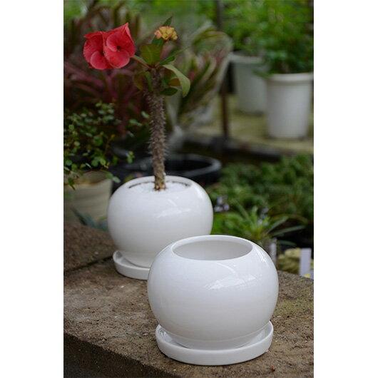 【ポイント5倍】植木鉢 観葉植物 【rara iuvant】 PPシリーズ 小型サイズ鉢 Ф12.5 x H9cm ララ・イワント