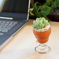 タニク・ハンモックのテラコッタの鉢もぴったりサイズ