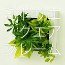 【midorie 10%オフ】ミドリエ スクエアフレーム 3個セット/全6色8タイプ【壁掛け観葉植物】【ギフト/プレゼント】