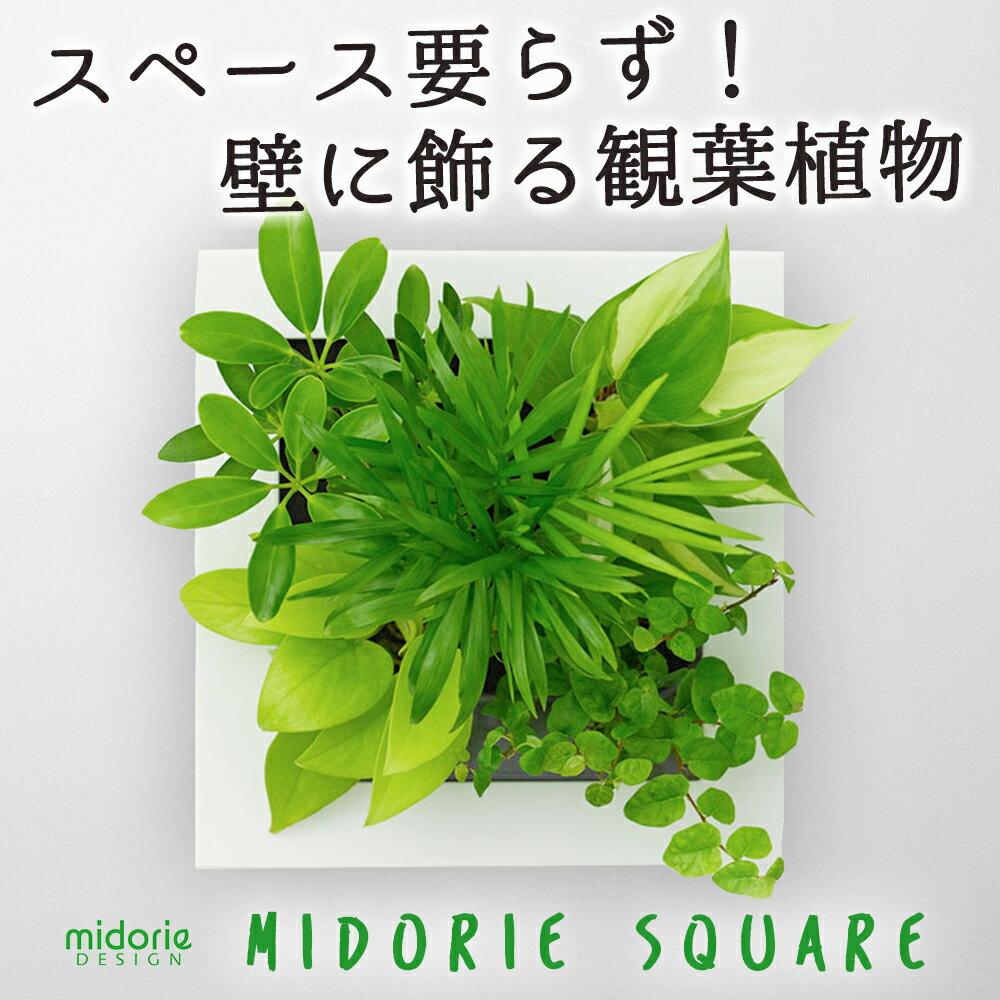 【midorie】ミドリエ スクエア フレーム壁掛け 観葉 植物 吊り下げ ハンギング おしゃれ 寄せ植え グリーン ボタニカル ギフト ラッピング アレンジメント 飾り